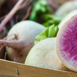 Radish: The Fastest Vegetable to Market
