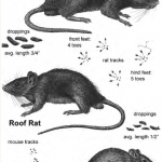 Controlling Rats and Mice around the Farm