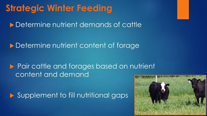 Mauldin Strategic Winter Feeding