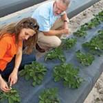 Small Farm Strawberry Field Day – April 18