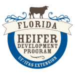 UF/IFAS offers Heifer Development Program for Cattle Producers