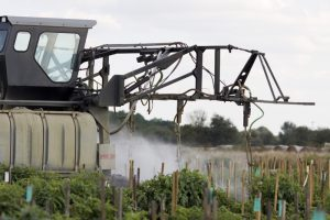 A tractor spraying pesticides on rows of tomatoes. UF/IFAS Photo by Tyler Jones.