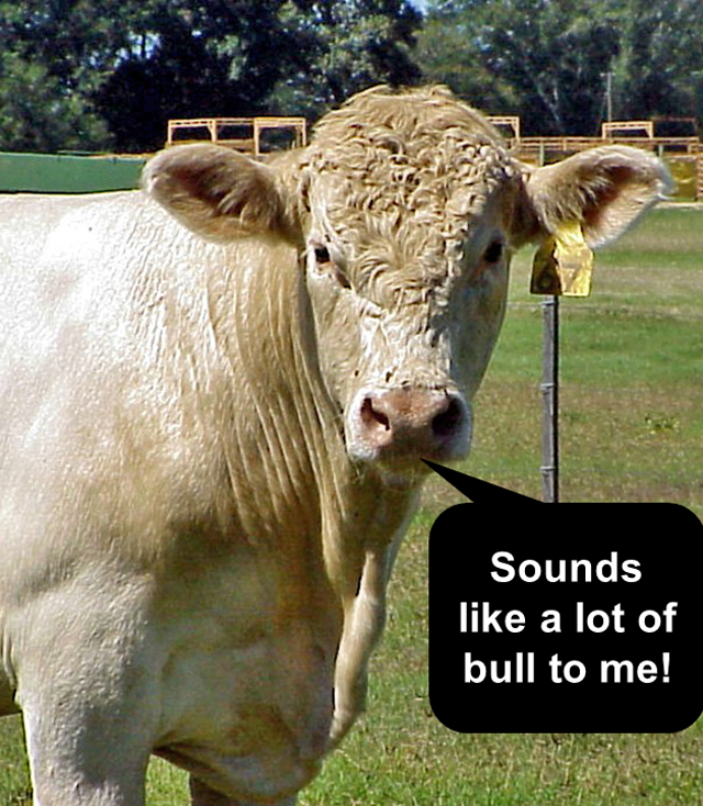 foto de Friday Funny: Top 20 Cow One liners