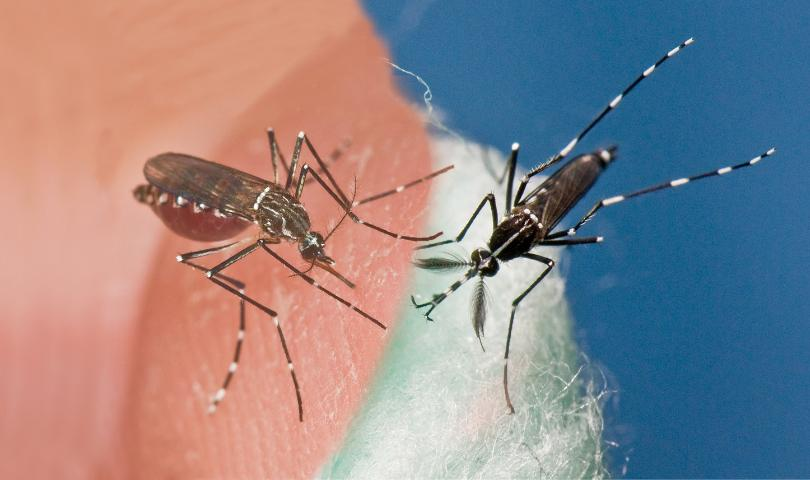 Do Your Part to Stop the Spread of Mosquito Borne Diseases