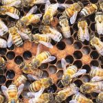Beekeeping in the Panhandle Summer Series – Starts August 17th