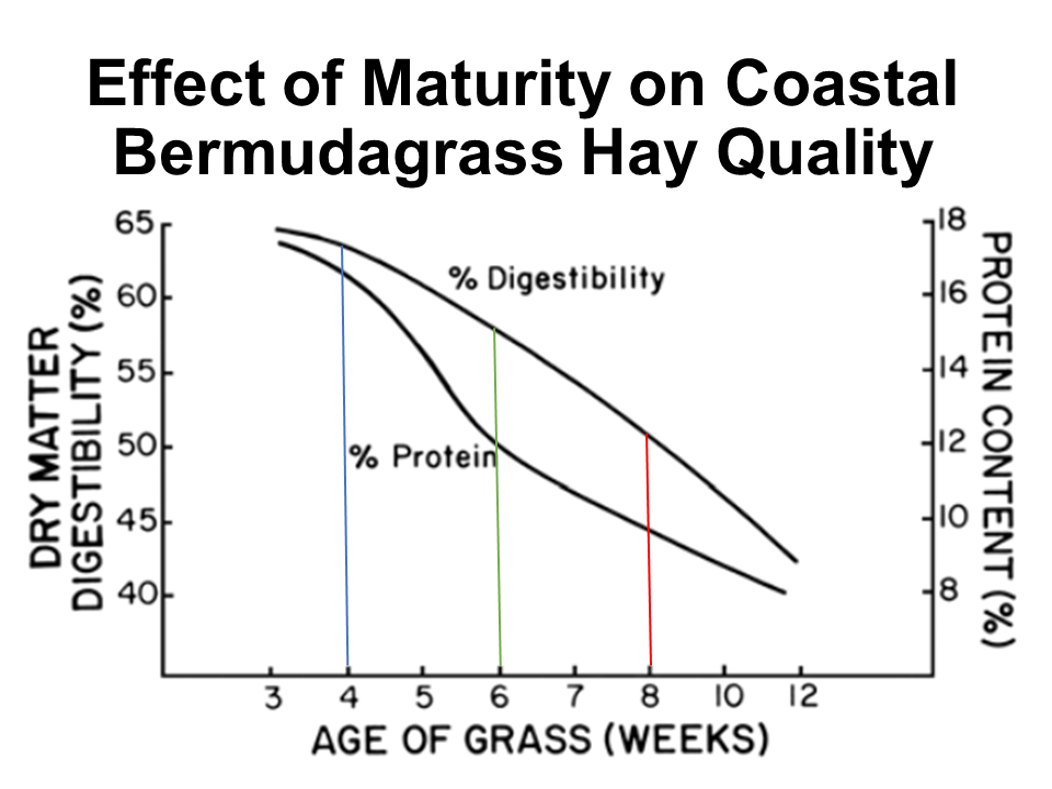 Effect of Maturity of Coastal Bermudagrass
