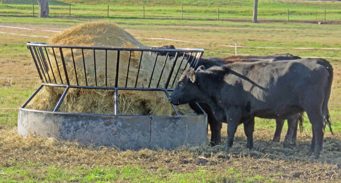 Introducing the New UF Hay Balancer Decision-Aid for Cattle Ranchers