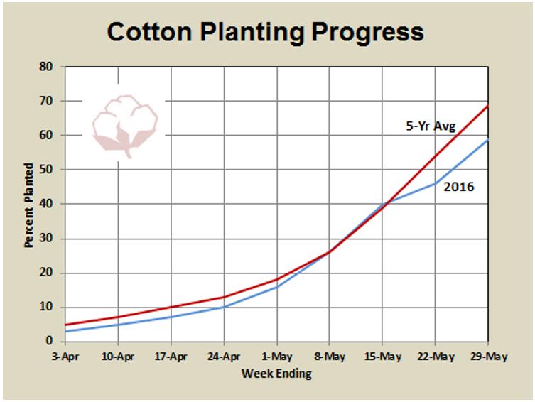Shurley planting progress 6-3-16