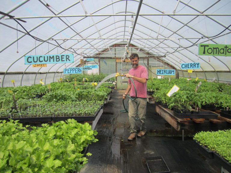 Richard in one of his greenhouses