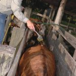 July Cattle and Forage Management Reminders