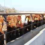 Medicated Livestock Feeds Will Require Veterinarian Authorization in 2017