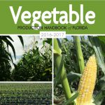 The Vegetable Production Handbook of Florida: The Go-to-Guide for Vegetable Farmers