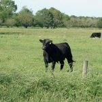 2016 Cool-Season Forage Variety Recommendations for Florida