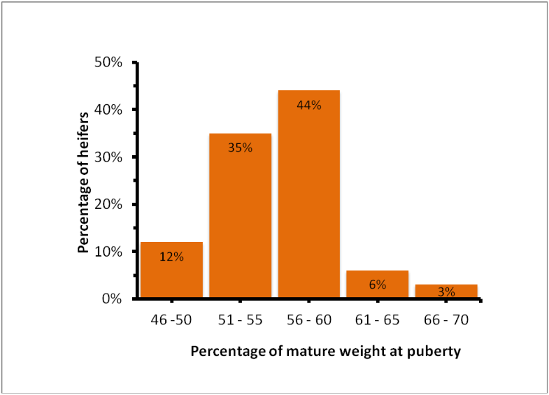Source: Relationship between weight at puberty and mature weight in beef cattle
