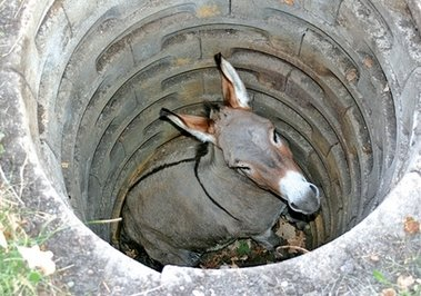 donkey-stuck-in-well