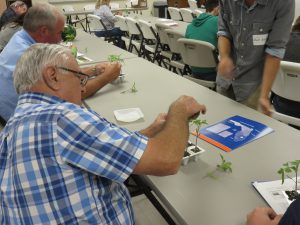 Grafting tomato transplants at the Panhandle Fruit & Vegetable Conference. Photo Credit: Doug Mayo, UF/IFAS Extension.