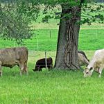 Improving Ranch Efficiency through Record Analysis