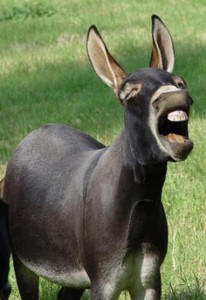 donkey-laughing