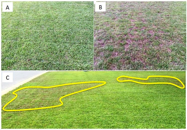 Helping Turfgrass Overcome Herbicide Injury | Panhandle Agriculture