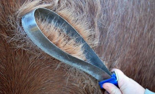 tenbroek-hair-shedding