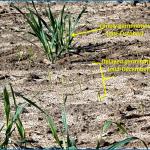 Tools for Assessing Soil Moisture