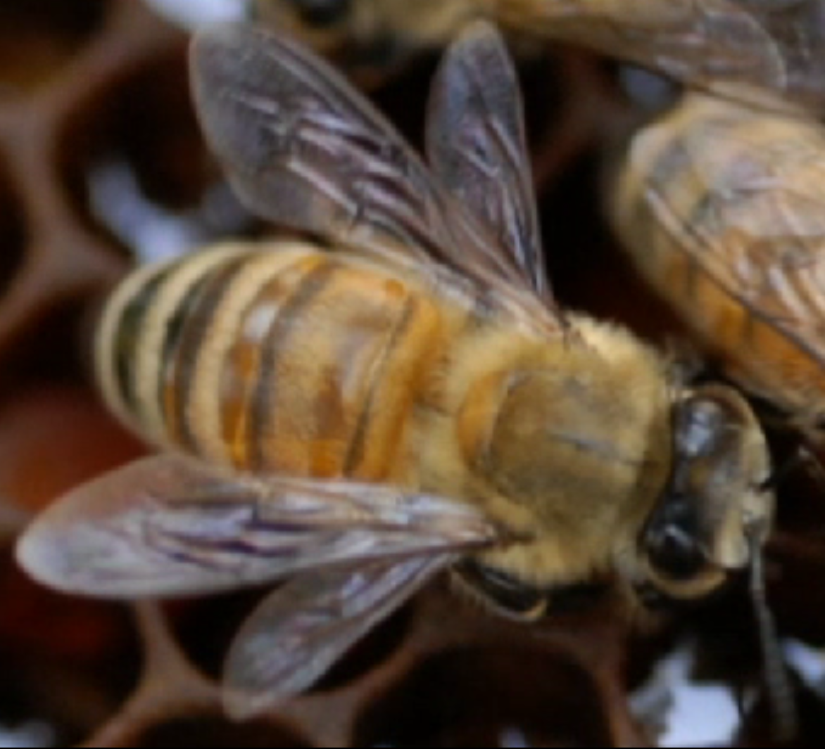 Winter Management Reminders for Panhandle Beekeepers