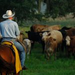 Friday Feature: Florida Ranchers Working Together to Supply Local Beef