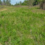 Converting from Pines to Pastures? Control Weeds before Planting