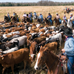 Great Florida Cattle Drive Film Screening May 18