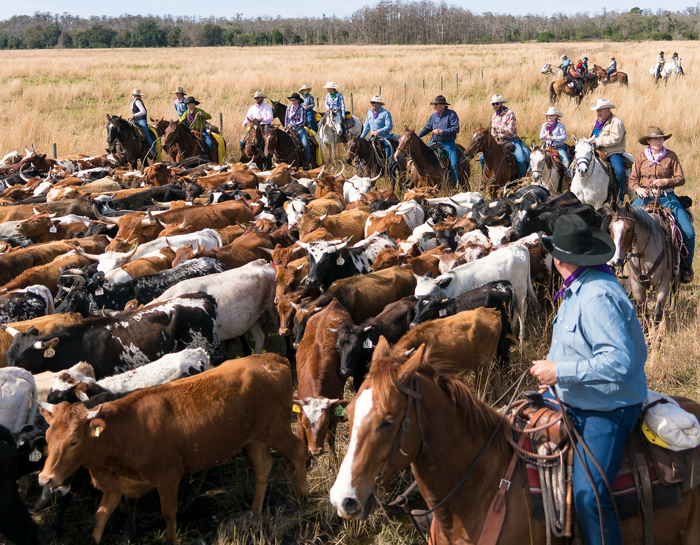 The Great Florida Cattle Drive of 2021 will Celebrate 500 Years of Florida Ranching