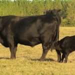 How Do I Legally Sell Beef from My Livestock Operation in Florida?