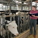 Dairy Cattle Conceived in Winter Perform Better