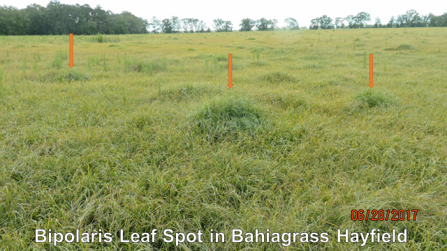 Soybean Rust Detected in Jackson County ……..