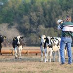 Friday Feature: The Dairy Heifers that Love Trombone Music