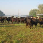Atypical BSE Cow Confirmed in Alabama