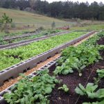 Organic Certification Cost Share Available for 2017