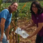 New UF/IFAS Entomologist is Surveying Insect Pests in Panhandle Row Crops