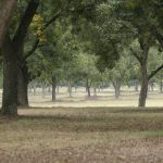 Pecan Field Day – September 12 – Monticello