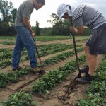 Peanut Nodule Analysis to Assess Crop Health