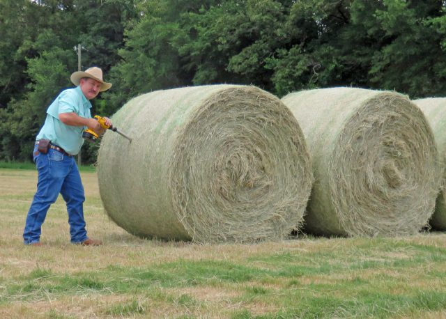October Cattle & Forage Management Reminders