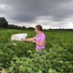 New Insect and Mite Control Guide for Florida Cotton Growers