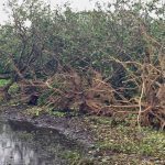 Florida Agricultural Damages due to Hurricane Irma Estimated $ 2.5 Billion