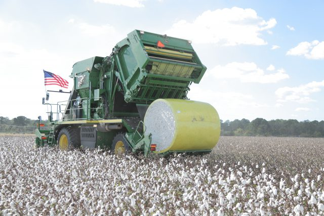 Cotton Defoliation Tips from Dr. Brown, AU Cotton Specialist