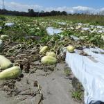 Farm Bureau Hurricane Irma Relief Fund for Agriculture