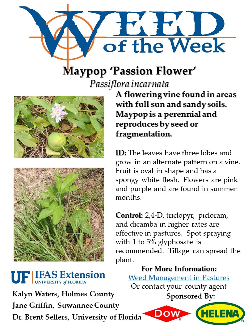 Weed Of The Week Maypop Passion Flower Panhandle Agriculture