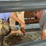 Evaluation of Feet & Legs in Cattle is Important for Longevity in the Herd