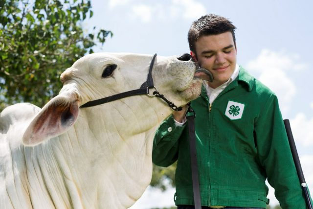 Future Livestock Producers are Developed through Local Livestock Shows