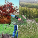 Controlling Brush & Invasive Species Workshop – November 9