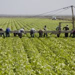 Update – What to Know About the New Temporary Ag Worker Bill?