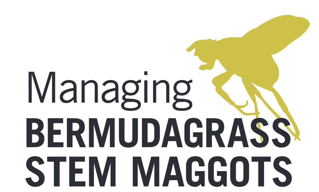 Georgia Forages: Bermudagrass Stem Maggot